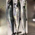 ナオキさんの鹿児島県垂水市での釣果写真