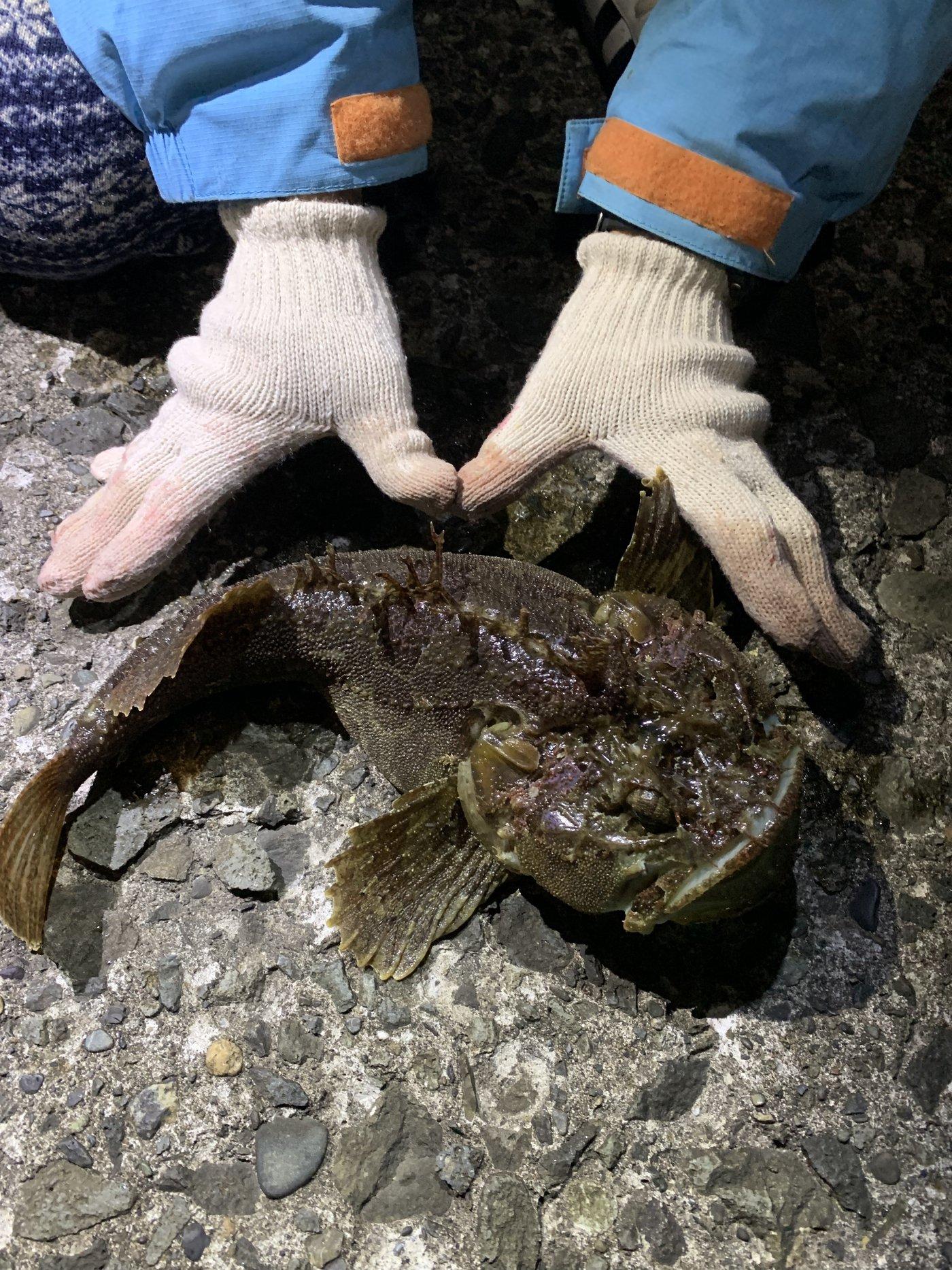 Hanaさんの投稿画像,写っている魚はケムシカジカ