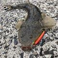釣恋人さんの鹿児島県志布志市での釣果写真