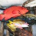 gonzuimaniacさんの沖縄県島尻郡でのアザハタの釣果写真