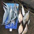 ぼんくぅさんの広島県呉市での釣果写真