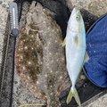 CQCQさんの静岡県でのヒラメの釣果写真