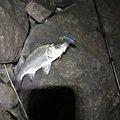 Yoshitaka さんの宮崎県宮崎市での釣果写真