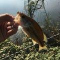shoyaさんの群馬県での釣果写真