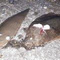 対々和さんの宮崎県でのヒラメの釣果写真