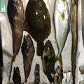 mi2106さんの宮城県でのアナゴの釣果写真