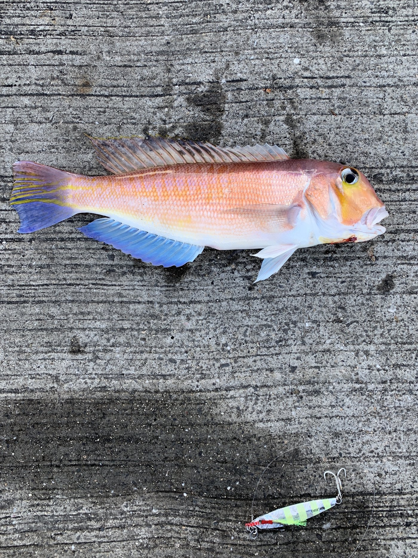 まっちゃんさんの投稿画像,写っている魚はアマダイ