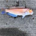 まっちゃんさんの愛媛県松山市での釣果写真
