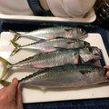 Ryosuke.Tさんの北海道函館市での釣果写真