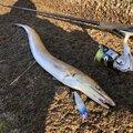 ひさとさんの山口県防府市での釣果写真