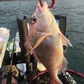 KFSさんの熊本県水俣市での釣果写真