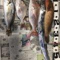 KFSさんの熊本県八代市での釣果写真