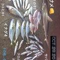 ママ子さんの鹿児島県鹿児島市での釣果写真