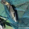 タイタンさんの佐賀県での釣果写真