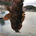 鷹さんの静岡県下田市での釣果写真