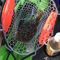 雷魚さんの福井県敦賀市での釣果写真
