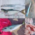 釣りごぢゃやろさんの兵庫県姫路市でのタチウオの釣果写真