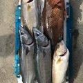 Naohito Manabeさんの鹿児島県指宿市での釣果写真
