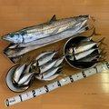 フィッシャーさんの神奈川県でのアジの釣果写真