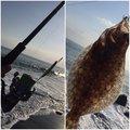 Yamanashiさんの静岡県でのヒラメの釣果写真