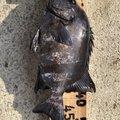 国さんさんの長崎県長崎市での釣果写真