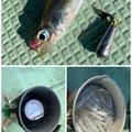 ひょーどるさんの佐賀県佐賀市での釣果写真