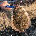 セルジオ越後さんの静岡県でのヒラメの釣果写真