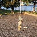 Akiさんのジンドウイカの釣果写真
