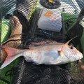 トシローさんの三重県尾鷲市での釣果写真