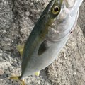 りょーすけさんの鹿児島県鹿児島市での釣果写真