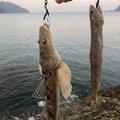 ちゃらさんの熊本県熊本市での釣果写真
