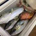 かずさんの鳥取県での釣果写真