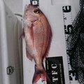 ポリちゃんさんの和歌山県和歌山市での釣果写真