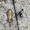 肥後釣り倶楽部🎣さんの熊本県天草市での釣果写真