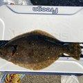 ネギトロさんの兵庫県洲本市での釣果写真