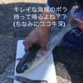 たかぴろさんの熊本県天草市での釣果写真