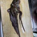 健TGさんの秋田県での釣果写真