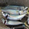 起死回生さんの青森県上北郡での釣果写真