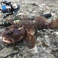 BBAさんの北海道小樽市での釣果写真