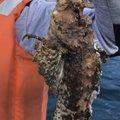 Ryo tさんのオニオコゼの釣果写真