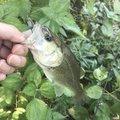 edenさんの岐阜県での釣果写真