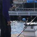 kiiysd13さんの大阪府泉佐野市での釣果写真
