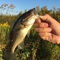 ショシン君さんの宮城県遠田郡での釣果写真
