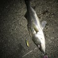 Daiki Nmanさんの東京都江戸川区での釣果写真