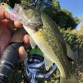 ケンピさんの滋賀県彦根市での釣果写真