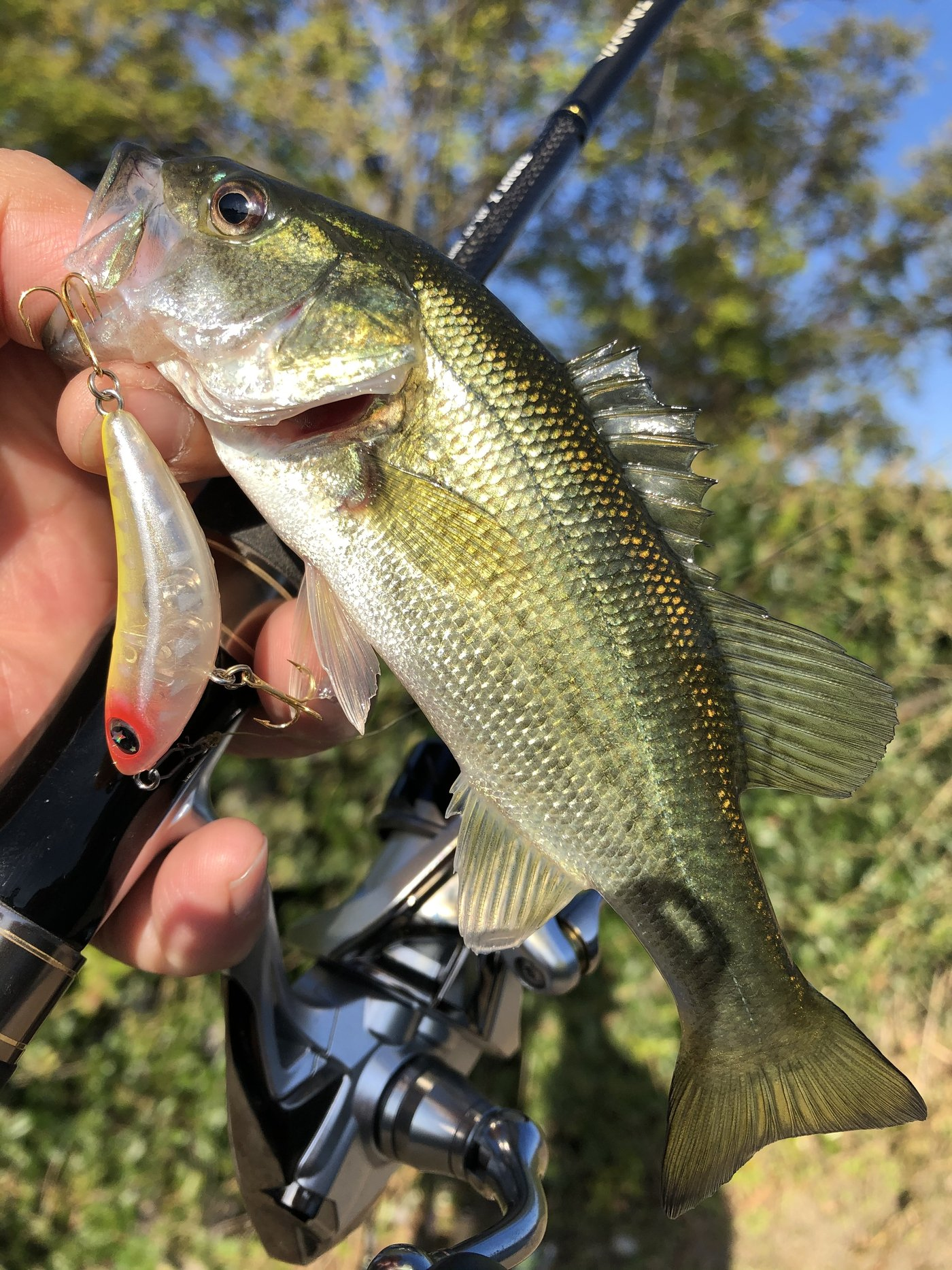 ケンピさんの投稿画像,写っている魚はブラックバス