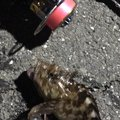 だーよしさんの神奈川県でのカサゴの釣果写真