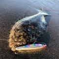 ふっちーさんの静岡県でのヒラメの釣果写真