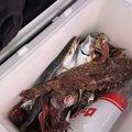 水上 浩人さんの佐賀県での釣果写真