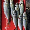 かんぱちさんの佐賀県での釣果写真